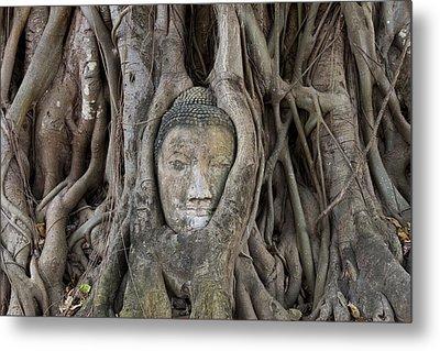 Buddha Head In Tree, Temple Wat Mahatat, Thailand Metal Print
