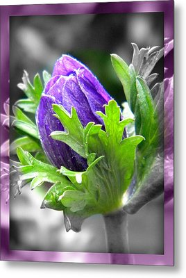Budding Flower Metal Print