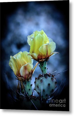 Metal Print featuring the photograph Budding Prickly Pear Cactus by Robert Bales