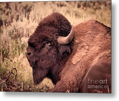 Metal Print featuring the photograph Buffalo Eye On You by Janice Rae Pariza