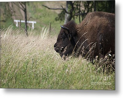 Metal Print featuring the photograph Buffalo Gal 20120724_378a by Tina Hopkins