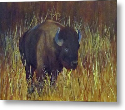 Metal Print featuring the painting Buffalo Grazing by Roseann Gilmore