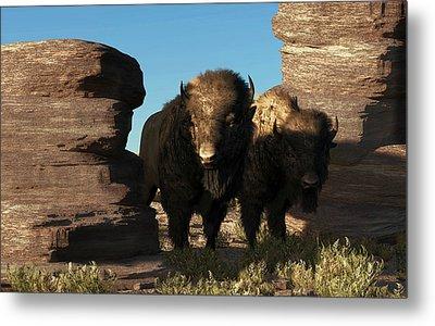 Buffalo Guard Metal Print by Daniel Eskridge