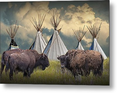 Buffalo Herd On The Reservation Metal Print