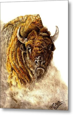 Buffalo Metal Print by Karen Cortese