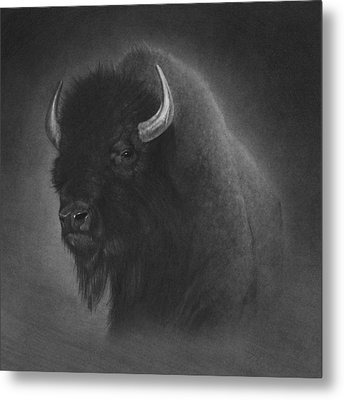 Buffalo Metal Print by Tim Dangaran