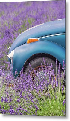 Metal Print featuring the photograph Bug In Lavender Field by Patricia Davidson