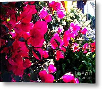 Metal Print featuring the photograph Bugambilia by Vanessa Palomino