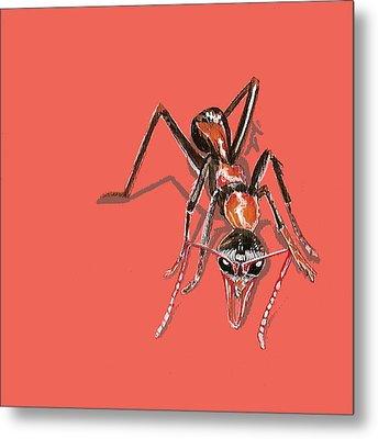 Bull Ant Metal Print
