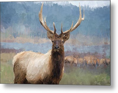 Bull Elk By The River Metal Print