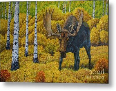 Bull Moose Metal Print by Veikko Suikkanen