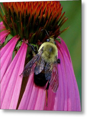 Bumble Bee Macro Metal Print by Martin Morehead