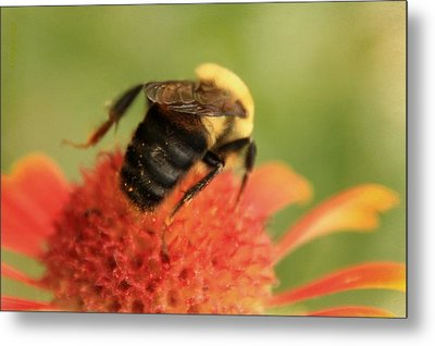 Metal Print featuring the photograph Bumblebee by Chris Berry