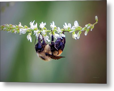 Bumblebee On Wildflower Metal Print