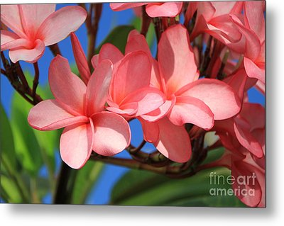 Metal Print featuring the photograph Bunches Of Pink Plumerias by Edward R Wisell