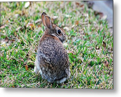 Metal Print featuring the photograph Bunny by Teresa Blanton