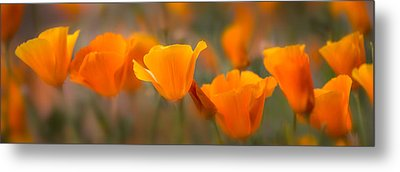 Burst Metal Print by Mikes Nature