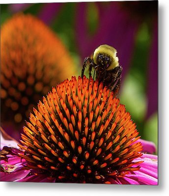 Busy As A ... Just Busy Metal Print