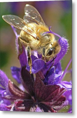 Busy Bee Metal Print by Katie LaSalle-Lowery