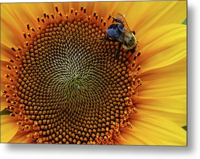 Busy Bee Metal Print by Mike Martin