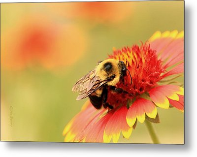 Metal Print featuring the photograph Busy Bumblebee by Chris Berry