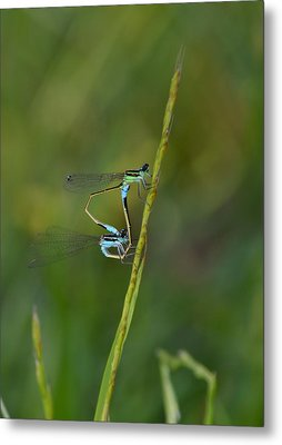 Busy Damsels Metal Print by Kathy Gibbons