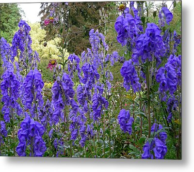 Butchart Gardens Blues Metal Print