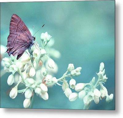 Metal Print featuring the photograph Buterfly Dreamin' by Mark Fuller