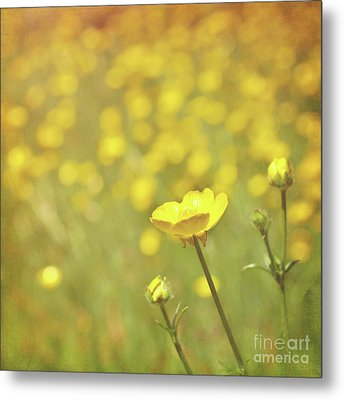 Buttercups Metal Print by Lyn Randle
