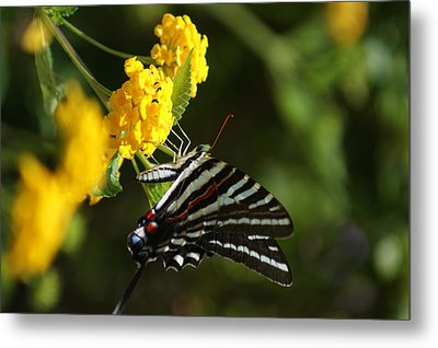 Butterflies And Blooms Metal Print