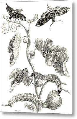 Butterflies, Caterpillars And Plant Metal Print