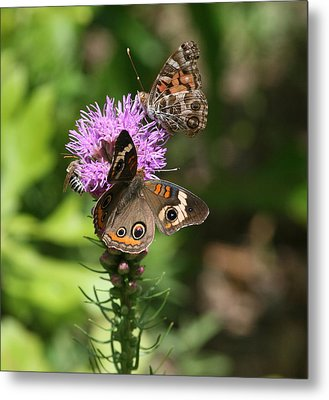 Butterflies And Purple Flower Metal Print
