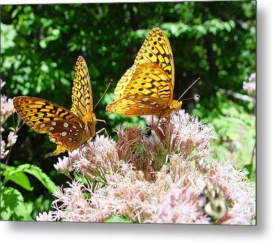Butterflies Metal Print by Eric Workman