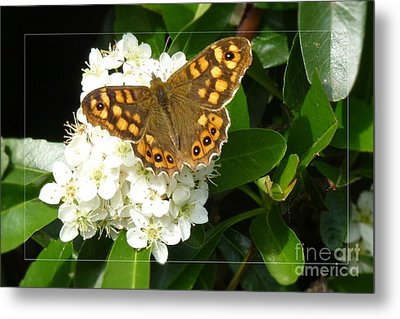 Metal Print featuring the photograph Butterfly 1 by Jean Bernard Roussilhe