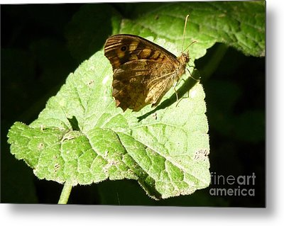 Metal Print featuring the photograph Butterfly 2 by Jean Bernard Roussilhe