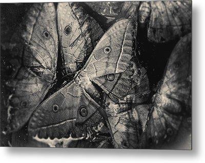 Butterfly #2056 Metal Print