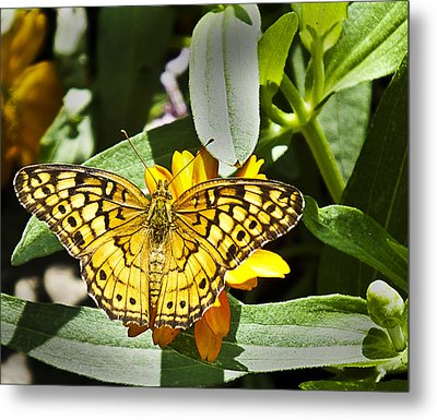 Metal Print featuring the photograph Butterfly At Rest by Bill Barber