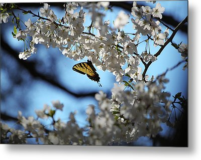 Butterfly Blossom Metal Print by Nathan Grisham