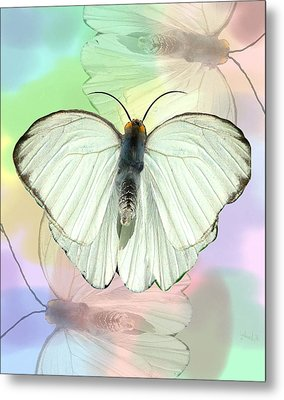 Butterfly, Butterfly Metal Print by Rosalie Scanlon