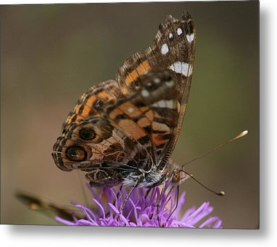 Metal Print featuring the photograph Butterfly by Cathy Harper