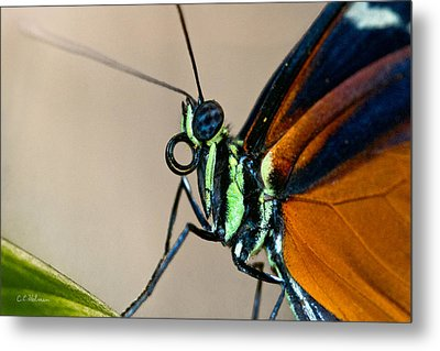 Butterfly Closeup Metal Print by Christopher Holmes