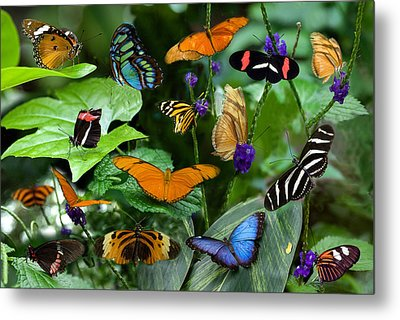 Butterfly Collage Metal Print by Cabral Stock