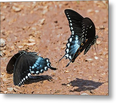 Metal Print featuring the photograph Butterfly Dance by Ron Dubin
