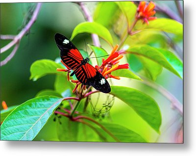 Metal Print featuring the photograph Butterfly  by David Morefield