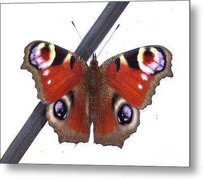 Butterfly Metal Print by Deborah Brewer