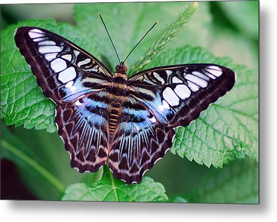 Butterfly Metal Print by Don  Wright