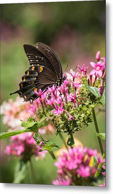 Metal Print featuring the photograph Butterfly Dream by Julie Andel