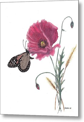 Butterfly Dreaming Metal Print by Stanza Widen