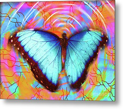 Butterfly Dreams Metal Print by Robert Ball