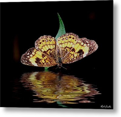 Butterfly Drink Metal Print by Rick Friedle